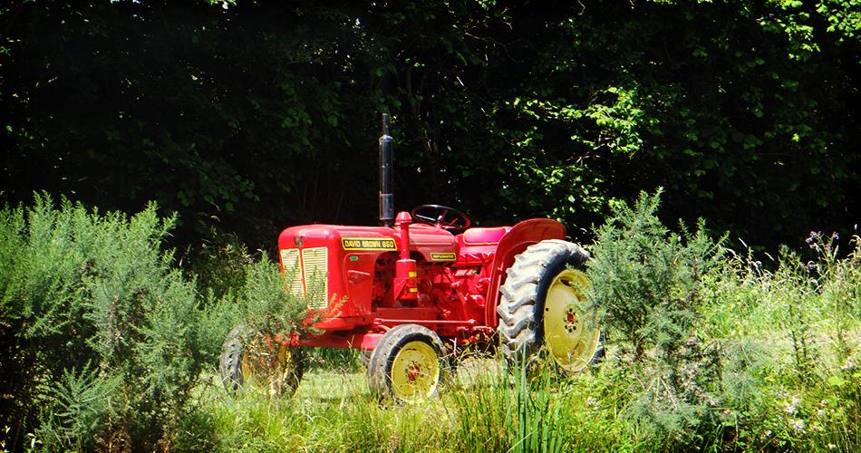 1960 Fully Restored David Brown Vintage Tractor