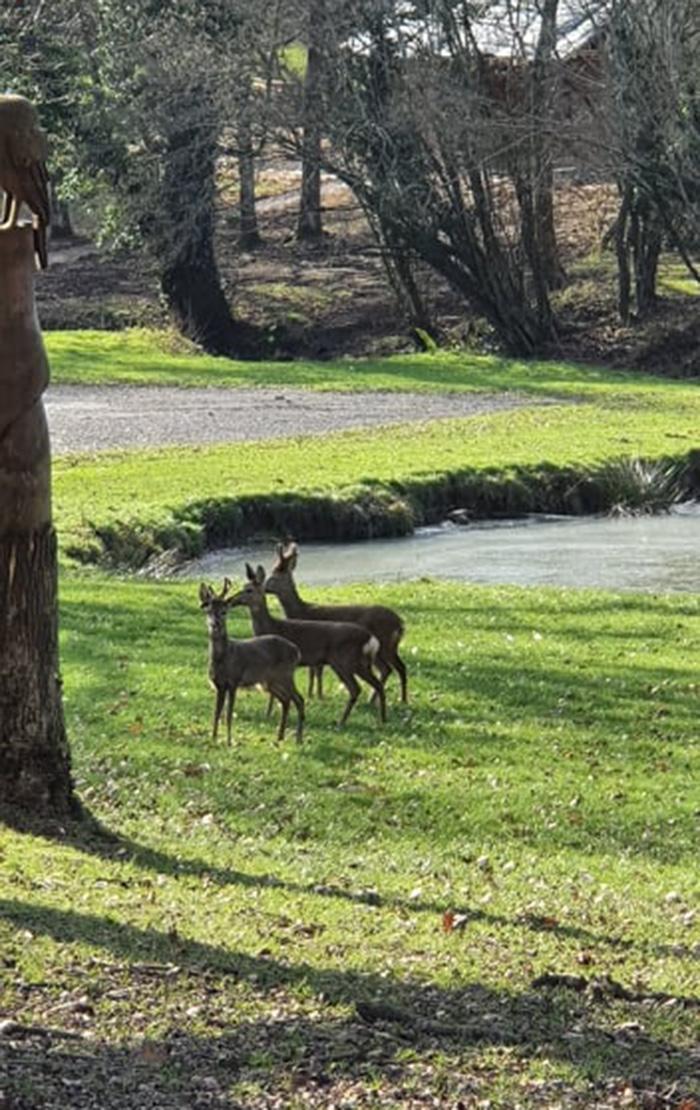 Deer In The Meadow