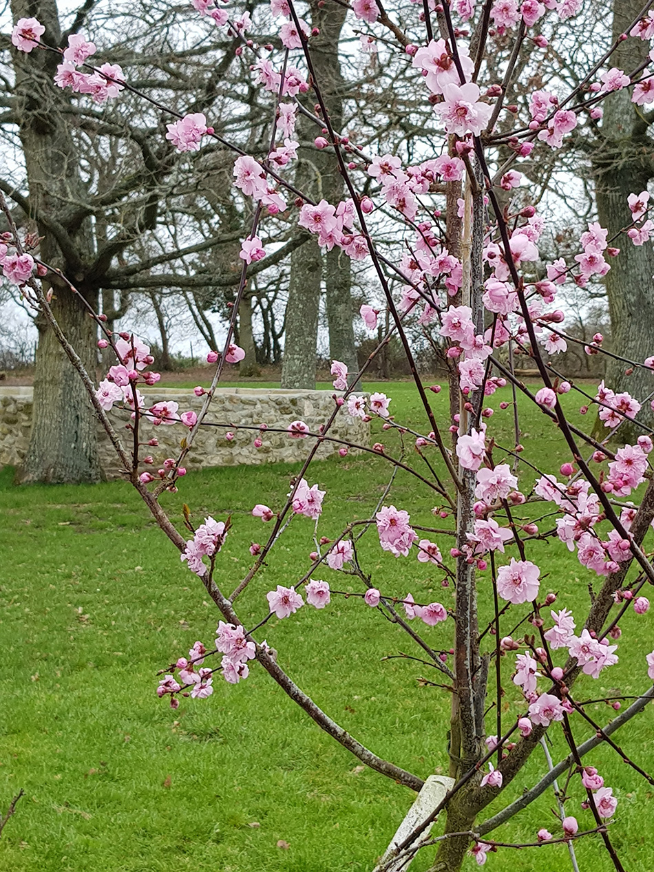 Blossom On The Trees